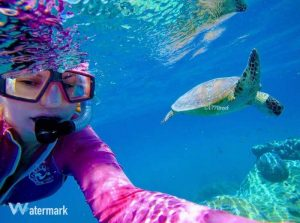 Turtle Selfies at Lady Musgrave Lagoon with 1770reef
