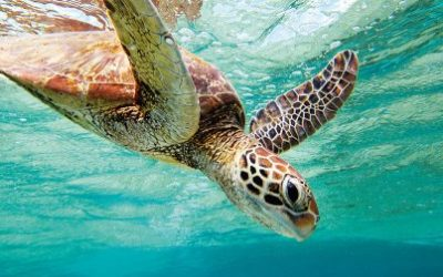 Key Facts about Sun, Turtles, and Reef at Lady Musgrave Island