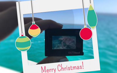 Christmas at the Great Barrier Reef