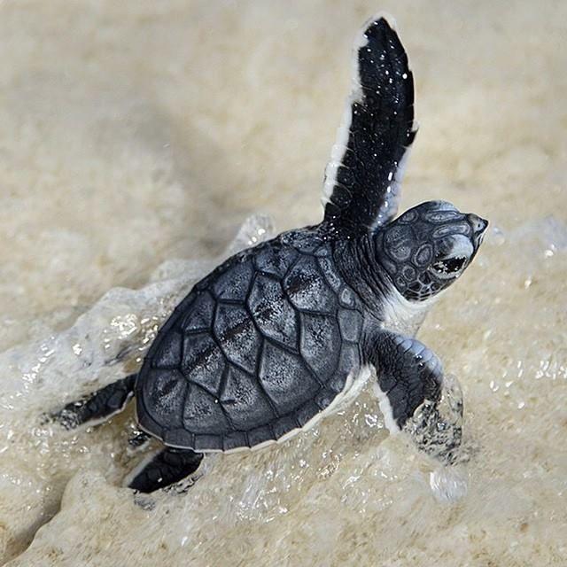 Baby Turtles Hatching