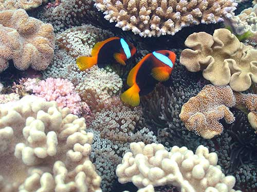 Finding Nemo at Lady Musgrave Island