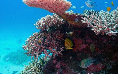 Snorkel the Southern Great Barrier Reef